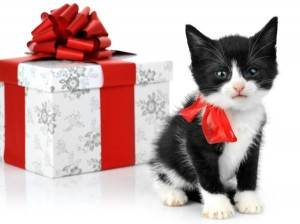 Котенок подарок